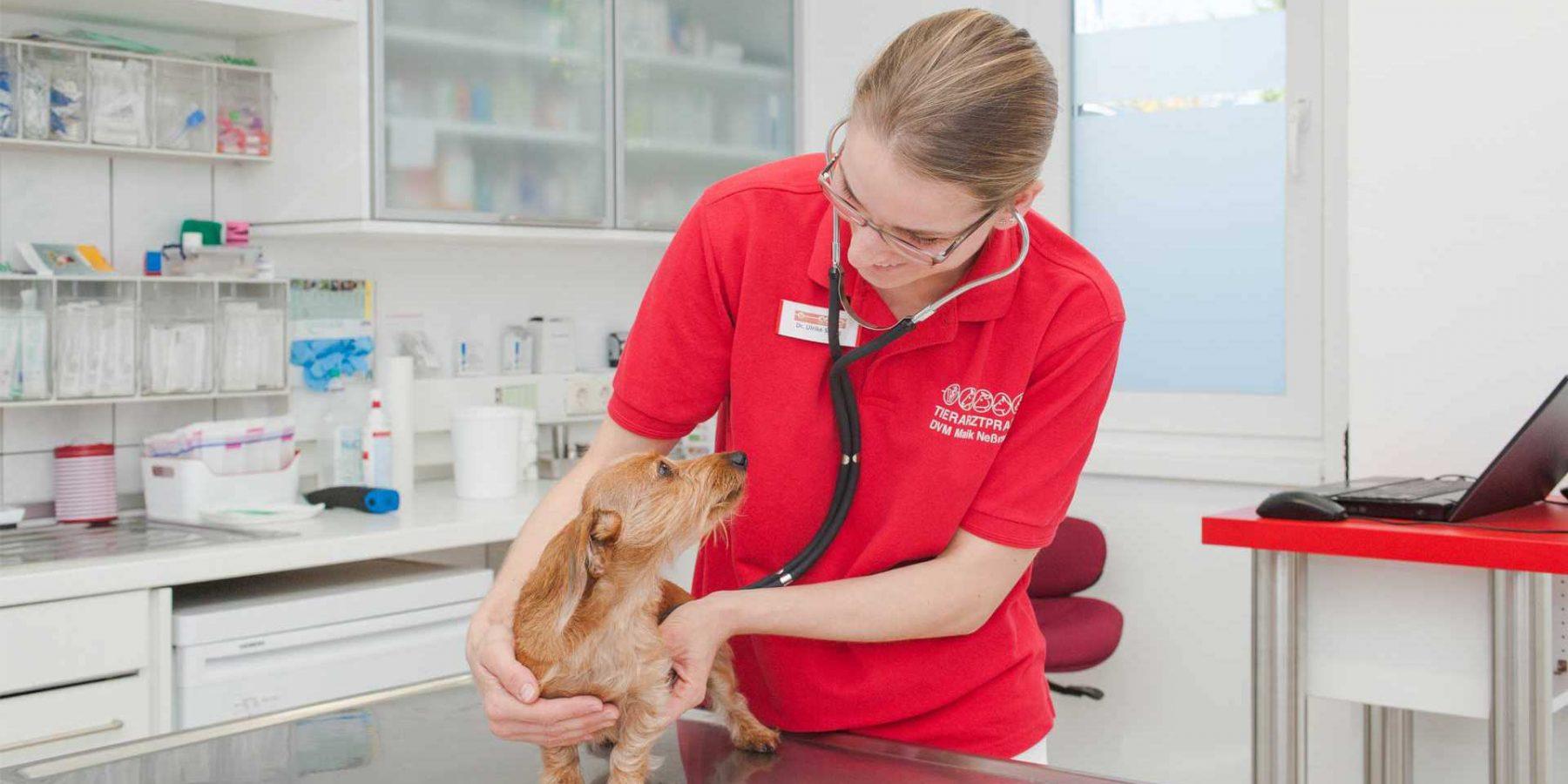Fotografie Nicole Franke - Tierarztpraxis